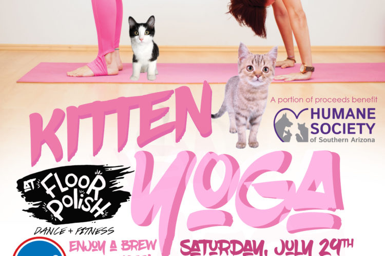 Kitten Yoga is Coming to our Studio